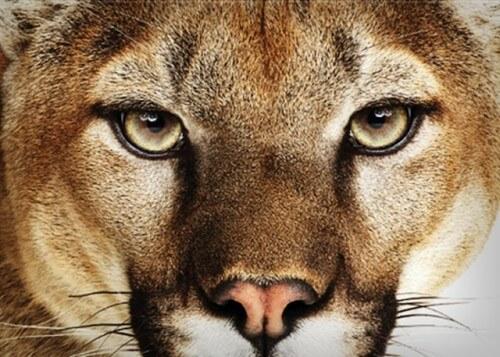 mountain-lion-os-x