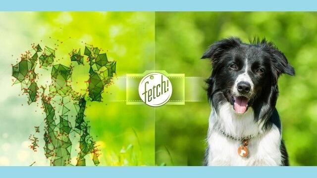 Microsoft lanza Fetch para iOS - copia