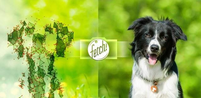 Microsoft lanza Fetch para iOS